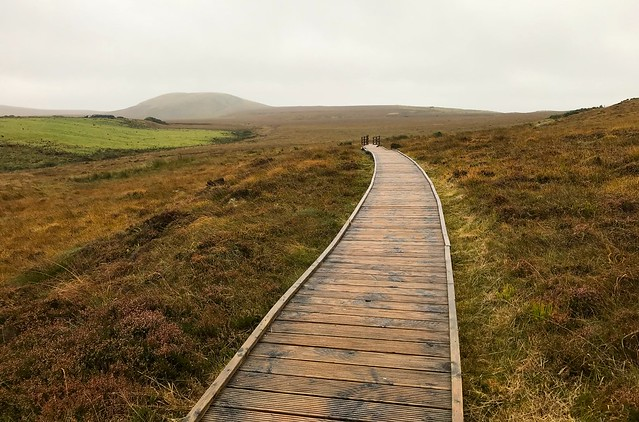 Wild Atlantic Way, Wild Mayo, 2017212