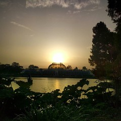 @kewgardens sunset on a beautiful day.