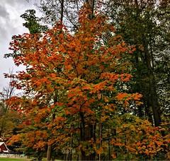 Autumn - Lake Farmpark
