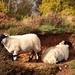 <p><a href=&quot;http://www.flickr.com/people/136526699@N04/&quot;>jeff.dugmore</a> posted a photo:</p>&#xA;&#xA;<p><a href=&quot;http://www.flickr.com/photos/136526699@N04/37688505836/&quot; title=&quot;Lambs on Stanton moor&quot;><img src=&quot;http://farm5.staticflickr.com/4452/37688505836_f4c7e3d920_m.jpg&quot; width=&quot;240&quot; height=&quot;180&quot; alt=&quot;Lambs on Stanton moor&quot; /></a></p>&#xA;&#xA;<p>Peak district</p>
