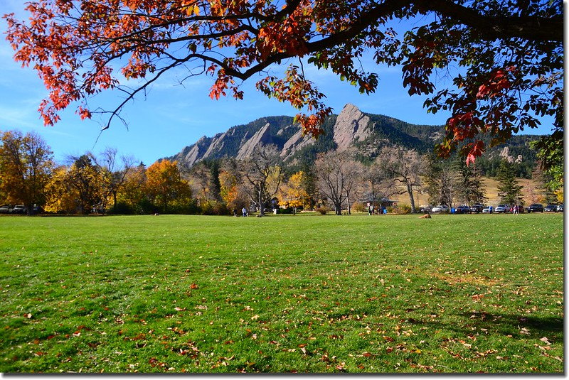 2017 Maple in Fall, Boulder, Colorado  (44)