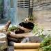 <p><a href=&quot;http://www.flickr.com/people/7910244@N06/&quot;>Robbert Bipat</a> posted a photo:</p>&#xA;&#xA;<p><a href=&quot;http://www.flickr.com/photos/7910244@N06/23967918288/&quot; title=&quot;Panda&quot;><img src=&quot;http://farm5.staticflickr.com/4453/23967918288_3d42e65b9d_m.jpg&quot; width=&quot;240&quot; height=&quot;160&quot; alt=&quot;Panda&quot; /></a></p>&#xA;&#xA;<p>Berlin zoo</p>