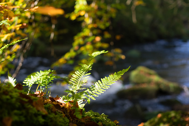 Fern at the river
