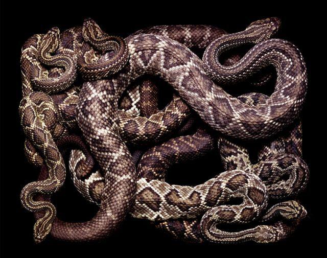 snake_art_09