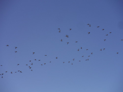 Birds in the Sky, Oare Marshes Nature Reserve