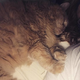 Jasper snuggles