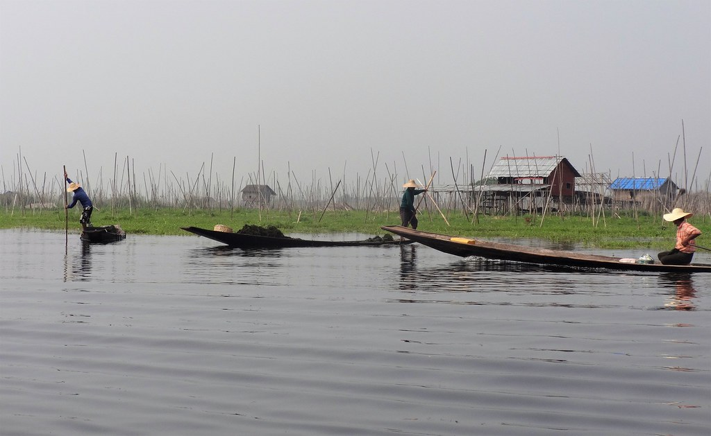 Przygotowywanie gruntu pod uprawy na Jeziorze Inle, Myanmar
