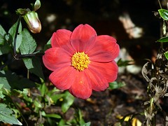 Flower in Bury 1
