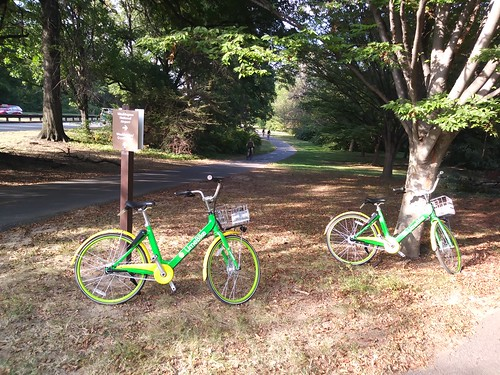 LimeBikes near National Airport on Mt Vernon Trail