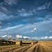 Harvest time. by AlbOst