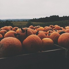 🎃 Halloween 🎃