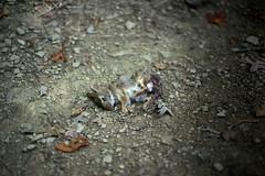 dead bunny 2