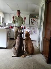 Dog visitors at The Cottage.