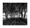 The Dark Hedges. by moniquevantorenburg