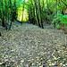 Autumn leaf strewn path