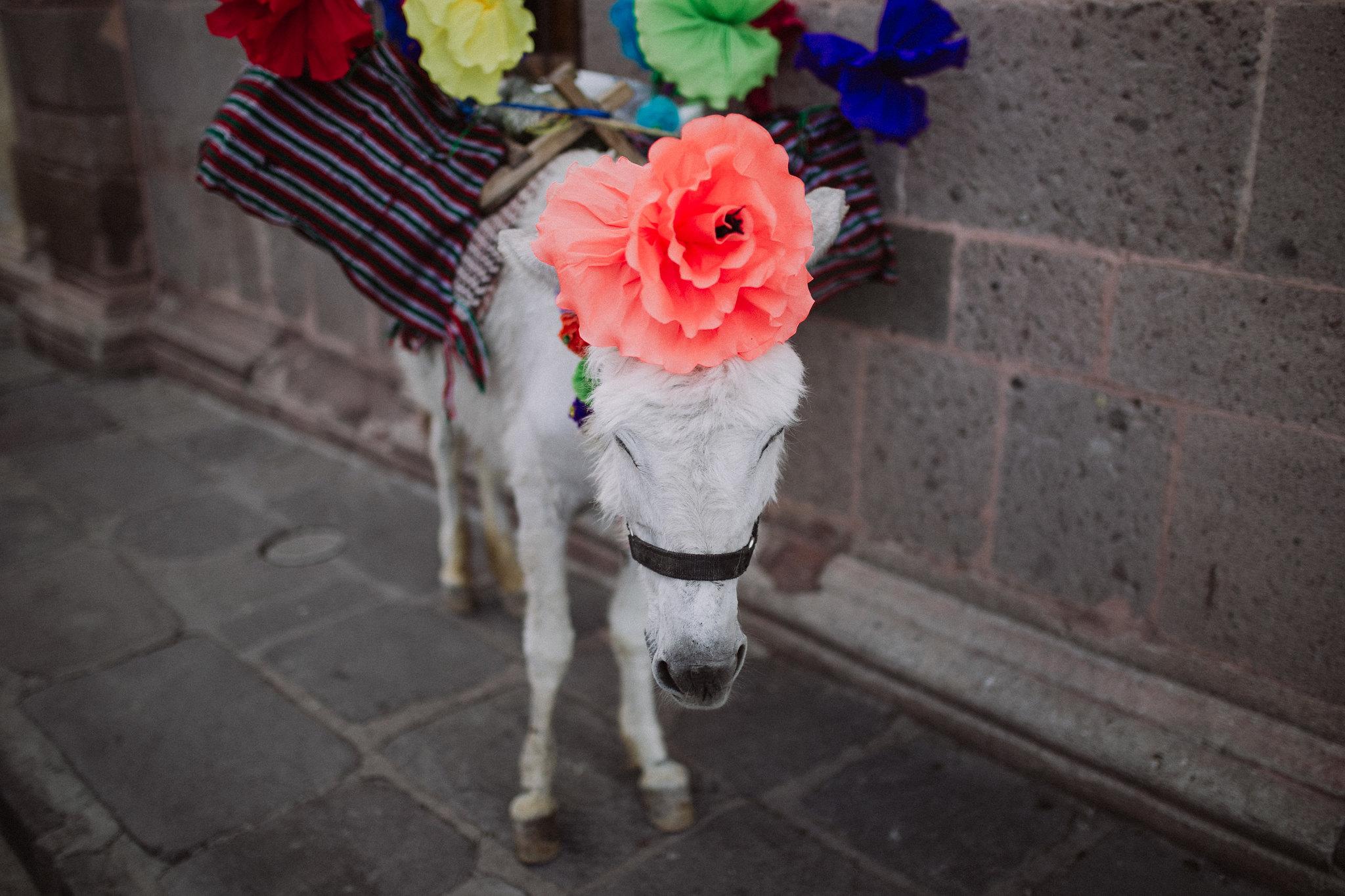 San-Miguel-de-Allende-elopment-Marlene-Patrick_0067b