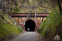Cheviot Tunnel