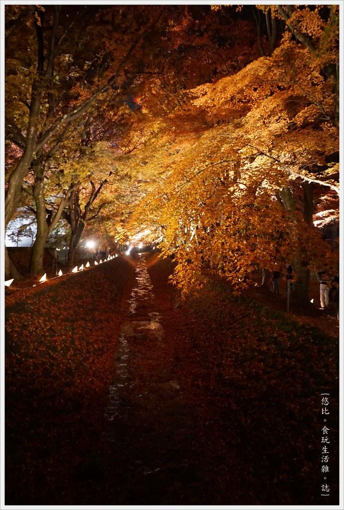 紅葉迴廊-紅葉祭-夜楓-35