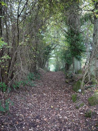 Leafy Paths