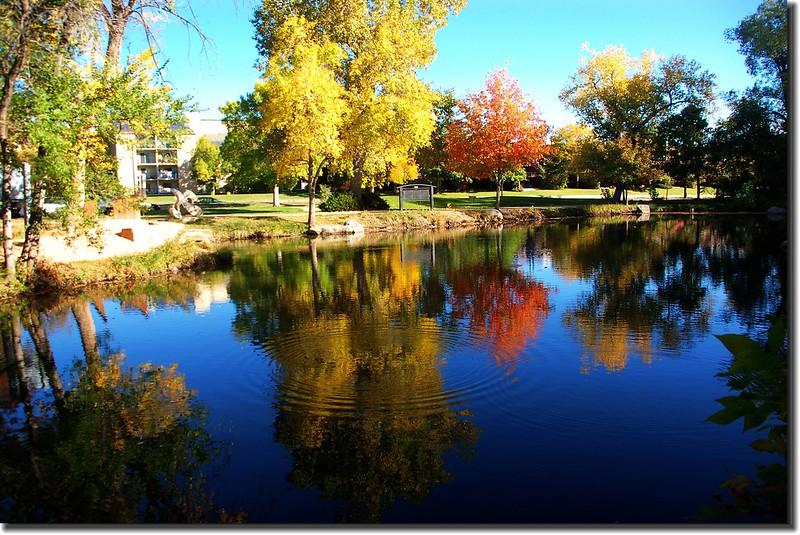 Maple in Fall, Boulder, Colorado