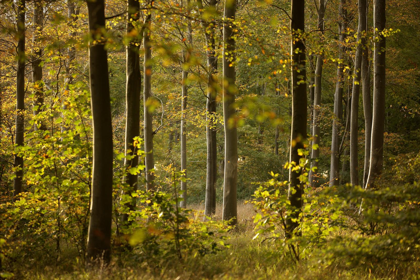 Autumn Scene, Friston Forest