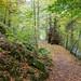 Woodland Path (Birks of Aberfeldy)
