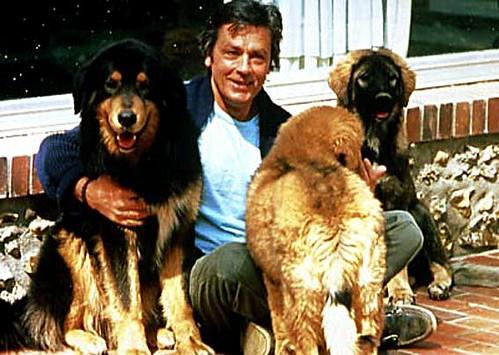 Os cães estão entres os seus animais  preferidos