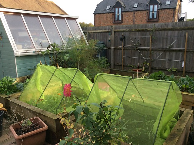 Right hand side of garden, with cat-proof bed covers and wildlife camera
