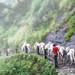 Mules- Ghandruk, Nepal by cattan2011