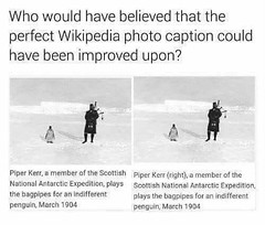 Piper penguin