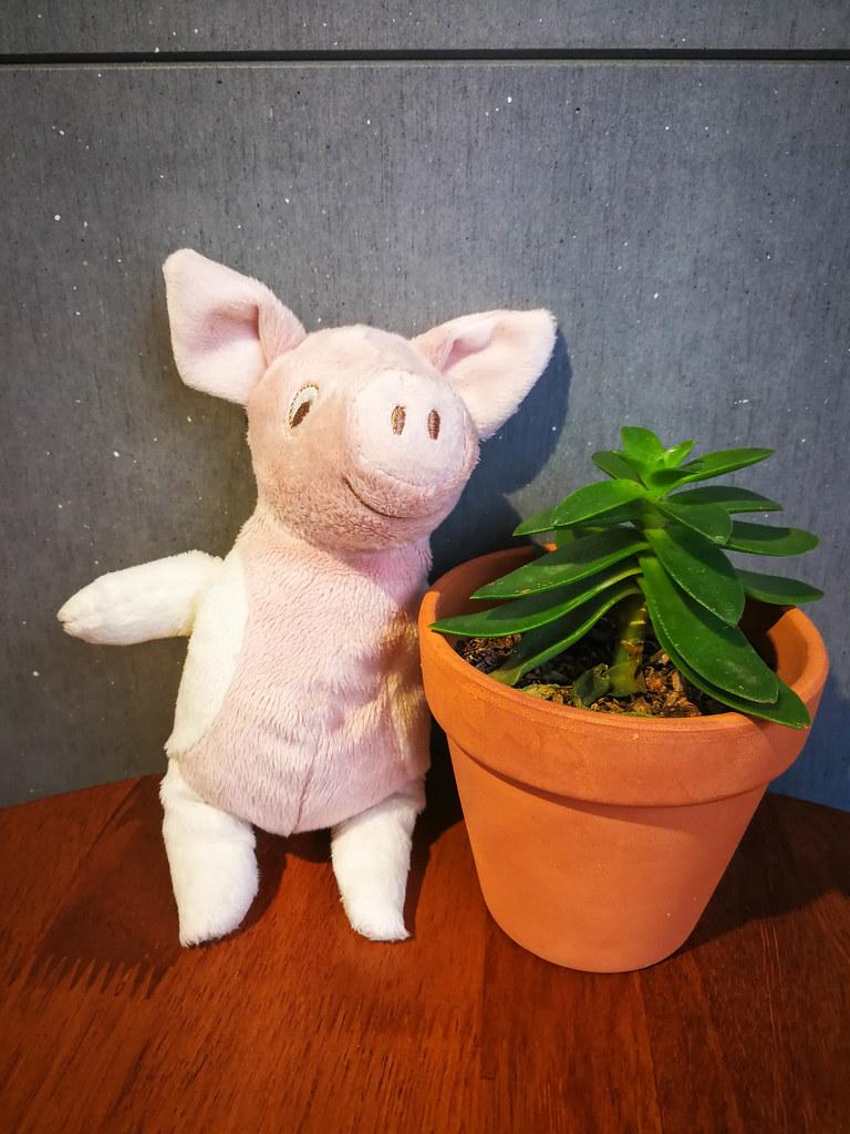 Lazy Pig 懶豬 三明治 (6)
