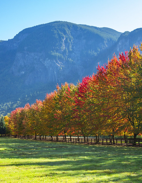 Fall Leaves under Mt. Si