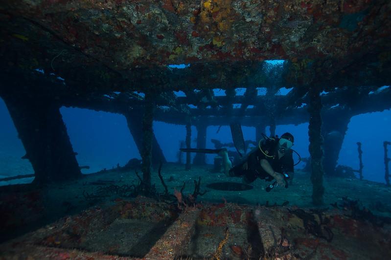 diving (14 de 77)