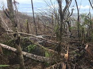 Shredded trees