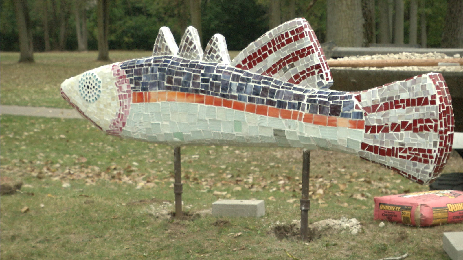 Disco Fish Arrive In Wonch Park