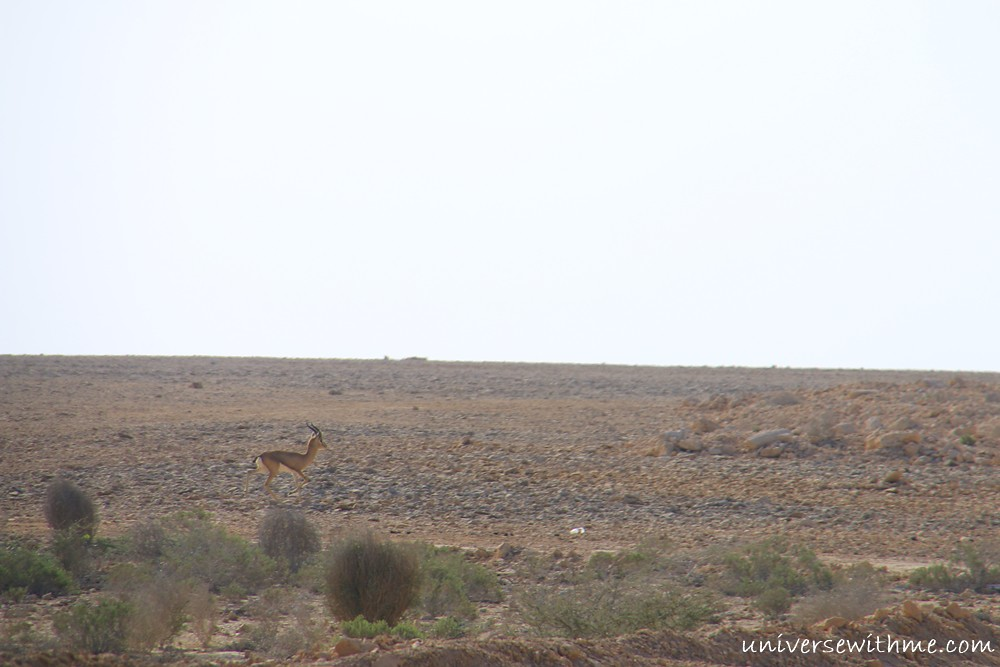 Oman_039