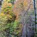 Autumn Colours (Birks of Aberfeldy)