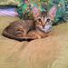 Nigel as a kitten by Layla Dishman