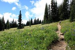 Meadow Wildflowers 2