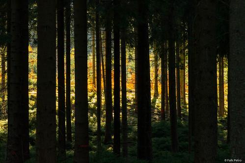 Wald im Zinsbachtal/Vogtland