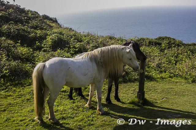 Pony...5_wm