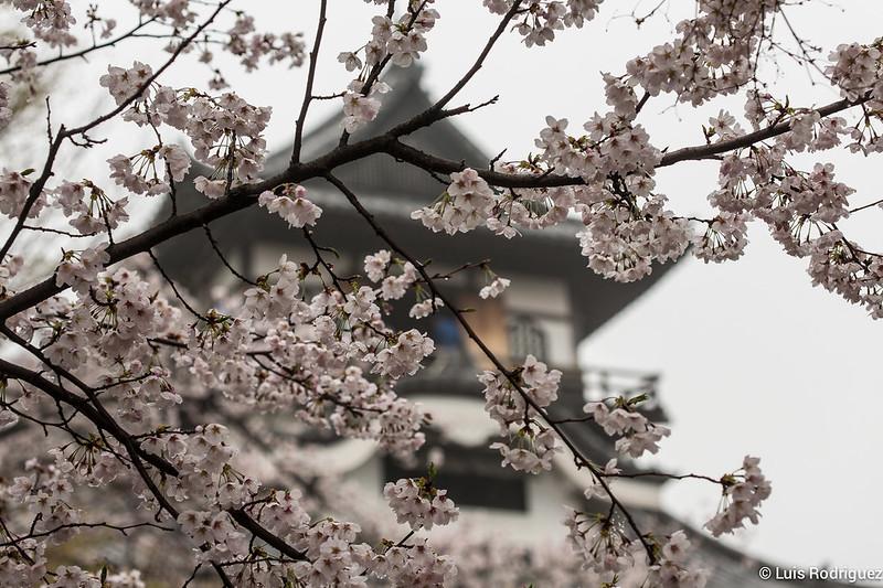 Inuyama-castillo-114
