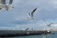 2013-Turquia-Istambul-0129.jpg