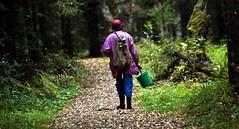 В Верхнедвинском районе уже неделю ищут 73-летнюю женщину