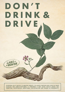 Don't Drink and Drive - Ayahuska Tea/Carambola/Peyote