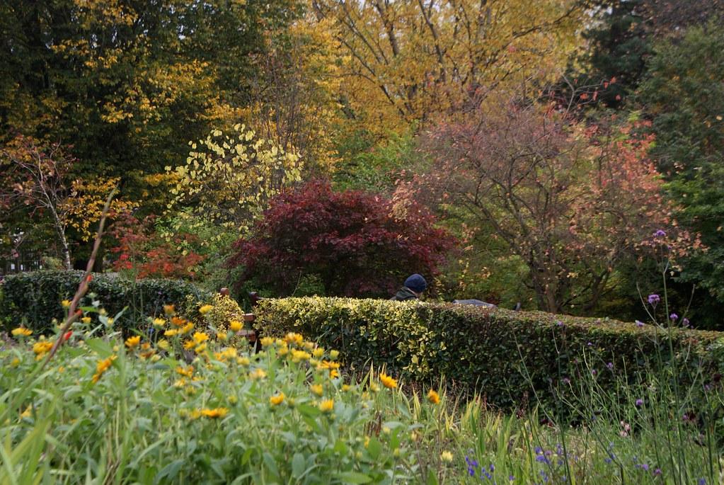 Spectacle de couleurs au jardin botanique de Glasgow en automne.
