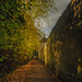 Autumn Walk - St.Ives