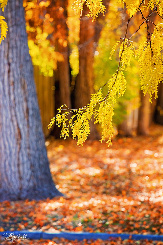 I Love Autumn! - Twin Falls, Idaho - 2017