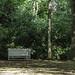 Old bench in bush