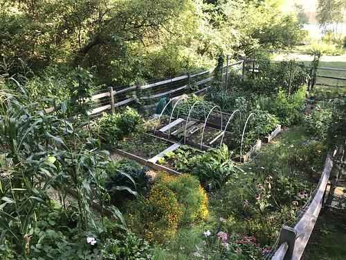 home garden IMG_0417